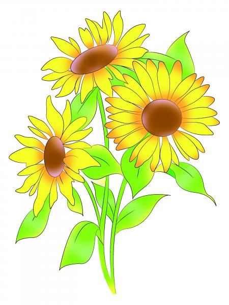 How to draw sunflowers step by step